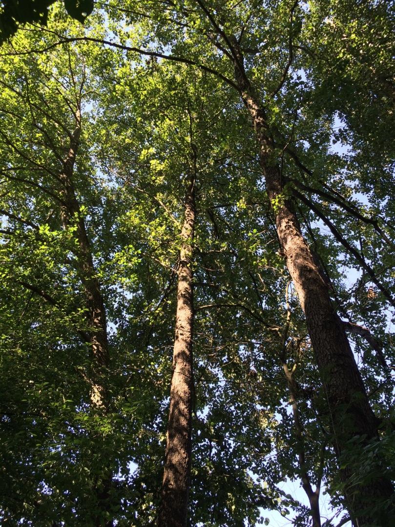 Foto 2. Imatge d'una verneda.